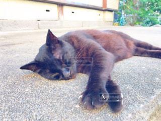 猫,動物,かわいい,昼寝,ペット,人物,黒猫,日向ぼっこ,ネコ,猫の島,ネコ科の動物