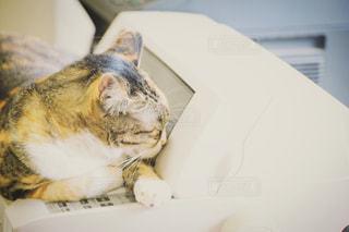 猫,動物,屋内,景色,ペット,寝る,コンピューター,ネコ,プリンター