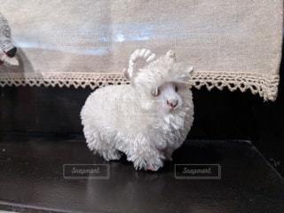 羊の人形の写真・画像素材[2954754]