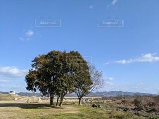 大きな木と青空の写真・画像素材[2983205]