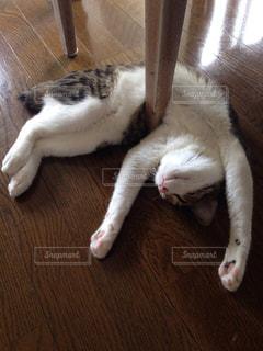 猫,動物,屋内,かわいい,ペット,子猫,人物,ネコ,のび,変な猫