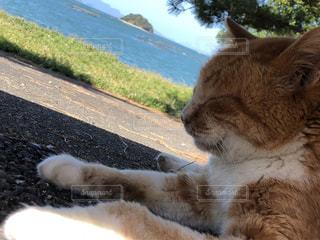 猫,海,動物,屋外,島,ペット,人物,リラックス,潮風,ネコ,ベンチの下