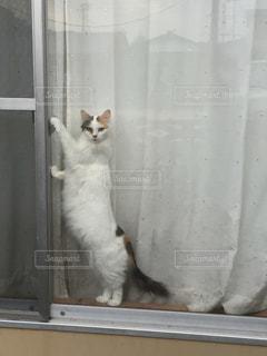 猫,動物,ペット,人物,ネコ,鍵開けようとしてるの見られた,器用な猫ちゃん