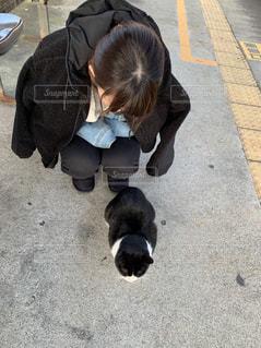 女性,猫,動物,ペット,人物,野良ちゃん,ネコ