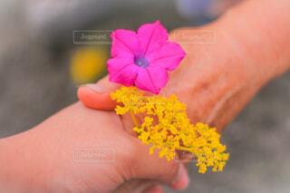 花,屋外,手,手持ち,人物,ポートレート,手つなぎ,ライフスタイル,手元,握手