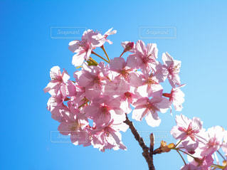 桜の花びらと光のきらめきの写真・画像素材[3003910]
