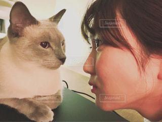 女性,1人,猫,動物,ペット,人物,ネコ