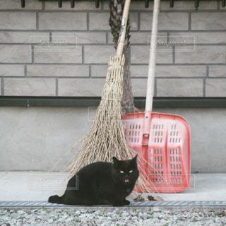 猫,動物,屋外,黒,ペット,人物,ほうき,黒猫,ネコ