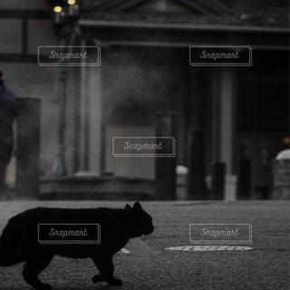 猫,動物,ペット,人物,黒猫,温泉街,ネコ