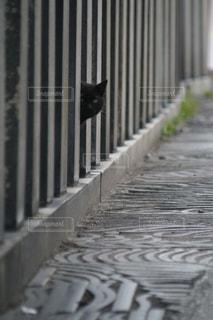 猫,動物,屋外,黒,ペット,人物,歩道,石,黒猫,ネコ