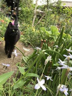 猫,動物,屋外,散歩,ペット,人物,草木