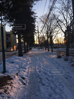 空,冬,雪,夕方,北海道,樹木,道,歩道,雪道,帰り道