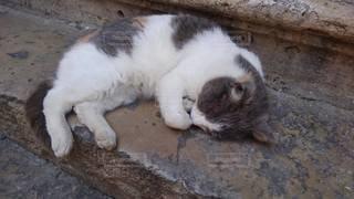猫,動物,かわいい,昼寝,ペット,寝る,子猫,人物,熟睡,ネコ,まるくなる