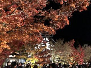 秋,紅葉,屋外,京都,お寺,レジャー