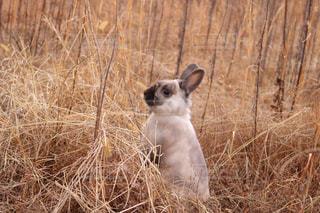 動物,屋外,ペット,立つ,乾燥,ウサギ