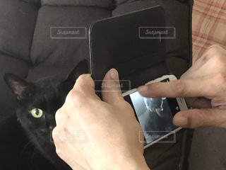 猫,動物,手,撮影,ペット,人物,黒猫,携帯,ネコ