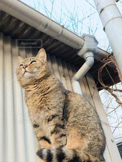 猫,空,動物,屋外,ペット,ネコ