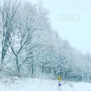 吹雪のあとの朝の写真・画像素材[2997218]