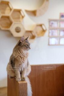 猫,動物,屋内,かわいい,ペット,人物,ネコ,ネコ科の動物