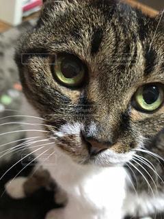 猫,動物,かわいい,ペット,人物,目,ネコ