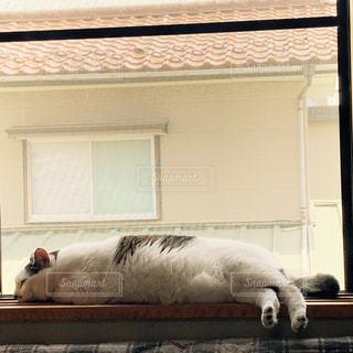 昼寝,人物,リラックス,ネコ