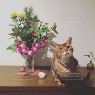 家族,猫,花,動物,ペット,人物,座る,ネコ