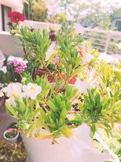 花の写真・画像素材[3165404]