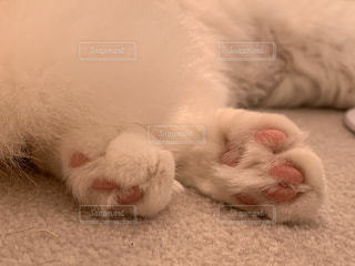 猫,動物,ピンク,白,かわいい,足,寝転ぶ,子猫,肉球,睡眠,お昼寝