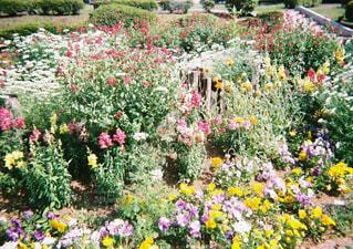 素敵な花壇の写真・画像素材[1382599]