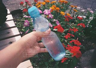 水分補給ねの写真・画像素材[1382628]
