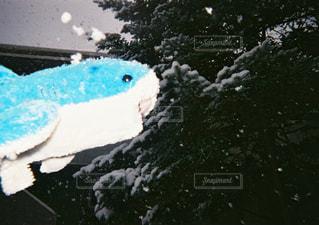 雪を泳ぐサメの写真・画像素材[1742008]