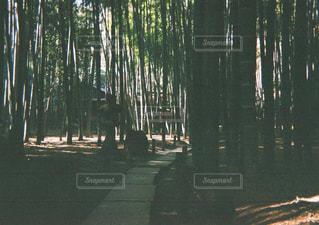 竹,フィルム,鎌倉,お散歩