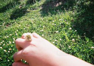 指輪の写真・画像素材[2260124]