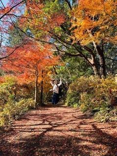 木の隣の土の道の写真・画像素材[2987218]