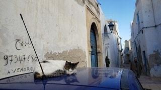 猫,動物,景色,ペット,人物,ネコ,チュニジア