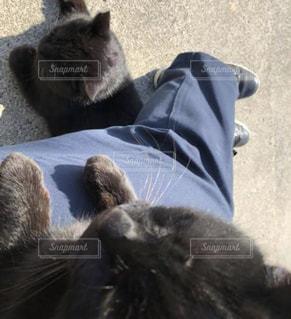 海辺の猫と日向ぼっこの写真・画像素材[2962413]