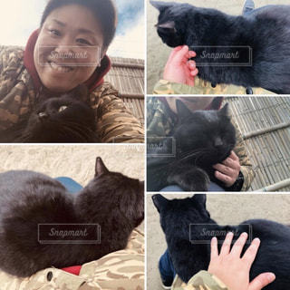 癒しをくれる海辺の猫と私の写真・画像素材[2962412]