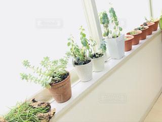 海辺の植物が元気に育つ部屋の写真・画像素材[2964222]