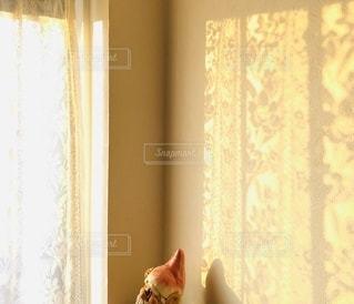 ♡朝陽の当たる部屋と影絵♡の写真・画像素材[3316660]