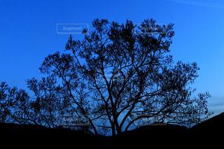 自然,風景,空,屋外,青,樹木,草木,日中,クラウド