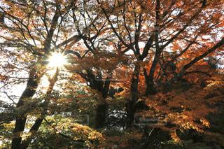 自然,風景,空,公園,秋,森林,屋外,葉,景色,樹木,日陰,草木,日中,カエデ