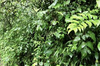 自然,風景,森林,木,屋外,葉,樹木,新緑,草木,シダ,クラウド,ガーデン