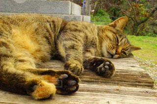 猫,動物,沖縄,ペット,人物,肉球,野良猫,ネコ,今帰仁,今帰仁城
