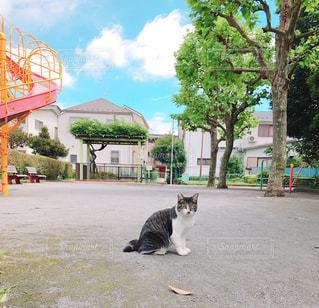 猫,動物,屋外,ペット,人物,野良猫,ネコ