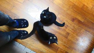 猫,動物,ペット,人物,黒猫