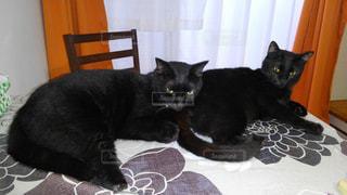 猫,動物,仲良し,ペット,黒猫