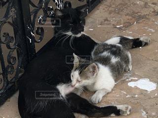 子ども,家族,猫,動物,黒,景色,ペット,人物,地面,ネコ科の動物
