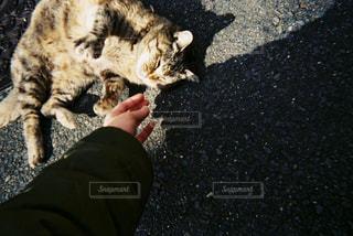 猫,動物,ペット,人物,癒し,野良猫,ネコ