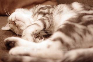 猫,動物,屋内,かわいい,寝転ぶ,ペット,寝る,子猫,人物,睡眠,ネコ,ネコ科の動物