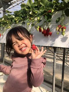 子ども,風景,花,屋外,少女,人物,人,笑顔,幼児,少し,人間の顔
